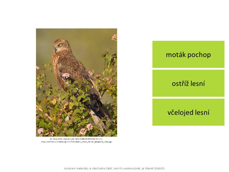 [cit. 2012-10-04]. Dostupný pod licencí Creative Commons na www: